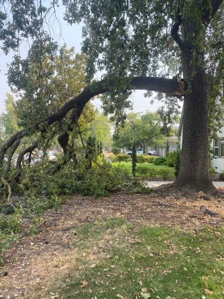 tree trimming services Fresno County CA
