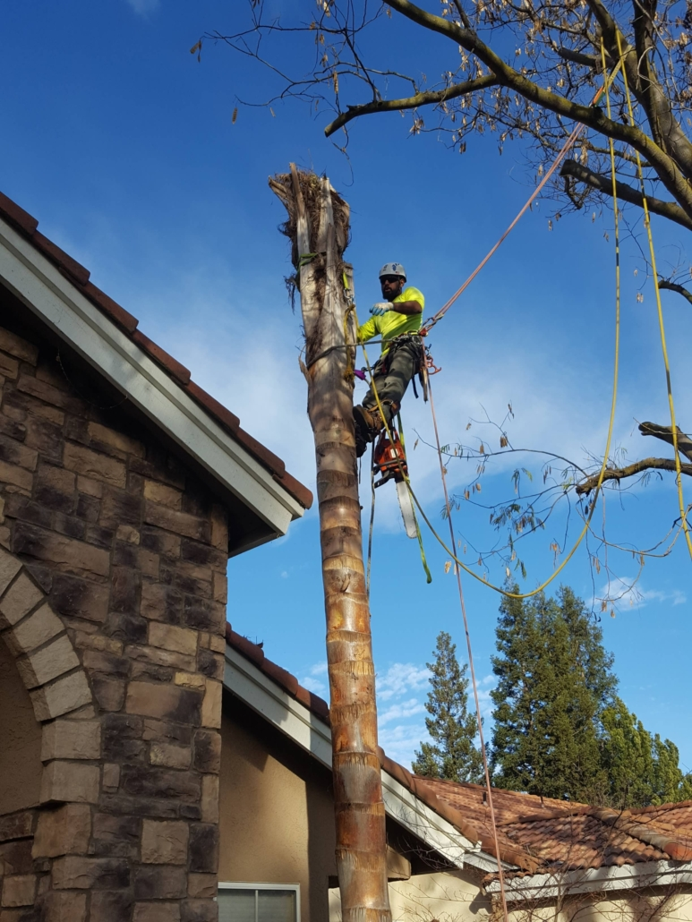 affordable tree services Tulare County CA